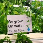 A literal future farms based on hydrophonics